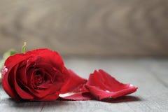Pojedynczy zmrok - czerwieni róża na drewnianym tle Obrazy Royalty Free
