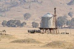 pojemnik wody pomocniczy owiec Fotografia Stock