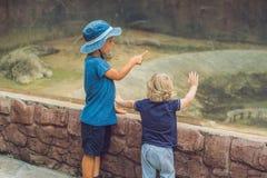 Pojkar som håller ögonen på reptilar i terrariumen royaltyfri foto