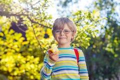 Pojke för liten unge med äpplet på väg till skolan royaltyfria bilder