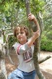 pojke hans tree Royaltyfri Foto