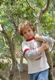 pojke hans tree Royaltyfri Fotografi