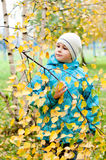 Pojke i en björkskog i höst Royaltyfria Bilder