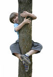Pojke i ett träd Arkivbild
