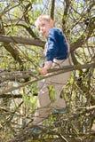 Pojke i ett träd arkivfoto