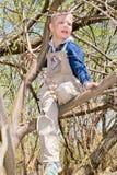 Pojke i ett träd fotografering för bildbyråer