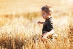 Pojke i vetefält Fotografering för Bildbyråer