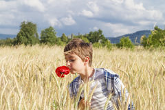 Pojke i vetefält Arkivbild