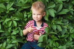Pojke med berrys Royaltyfri Bild