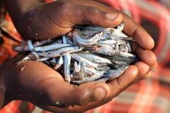 Pojke med den lilla fisken i hans händer, sjö Malawi Royaltyfri Fotografi