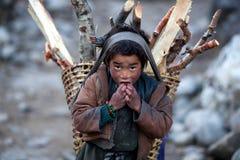Pojke med korgen av vedträn, Nepal Royaltyfria Bilder