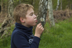 Pojke med maskrosen Royaltyfri Bild