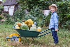 Pojke med skottkärran i trädgård Arkivbilder