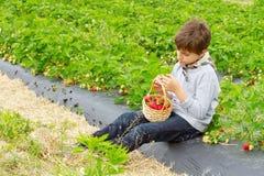 Pojke med skörden av jordgubbar i en korg Arkivbild