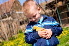 Pojke och ankunge Fotografering för Bildbyråer
