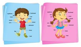 Pojke och flicka med olika kroppsdelar royaltyfri illustrationer