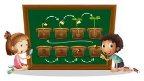 Pojke och flicka som ser växtdiagrammet Arkivfoto
