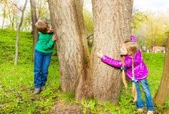Pojke och flicka som spelar kurragömma i skogen Arkivbild