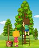 Pojke- och flickaplockningäpplen från trädet Royaltyfria Foton