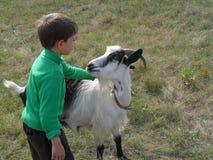 Pojke och get Fotografering för Bildbyråer
