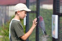 Pojke och papegoja royaltyfri fotografi