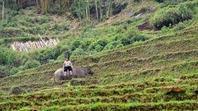 Pojke på buffel Arkivfoton