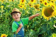 Pojke på en gå i fältet med solrosor royaltyfria foton