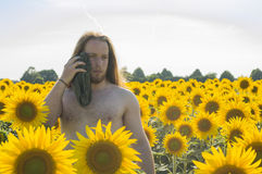 Pojke på solrosfältet Royaltyfria Bilder