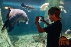 Pojke som använder en telefon som tar ett foto av arapaimagigas eller pirarucuuppehället i Amazon River i det undervattens- enorm arkivfoton