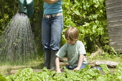 Pojke som arbeta i trädgården med modern som bevattnar växter Royaltyfri Foto