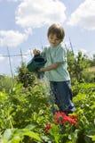 Pojke som bevattnar blommor i gemenskapträdgård Arkivbild