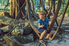 Pojke som håller ögonen på tropiska lianer i våta tropiska skogar Arkivfoton