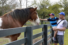 Pojke som klappar hästen Royaltyfri Foto
