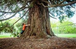 Pojke som kramar ett stort träd Arkivfoton