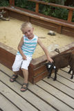 Pojke som leker med den små svarta geten i sandlåda Arkivbild