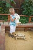 Pojke som leker med kanin och sköldpaddan i sandlåda Royaltyfria Bilder