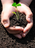 pojke som planterar groddar Royaltyfria Foton