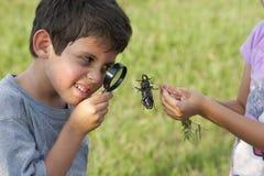 Pojke som ser skalbaggen till och med förstoringsglaset royaltyfria bilder