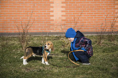 Pojke som utbildar hunden Arkivfoton