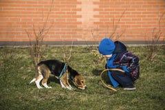 Pojke som utbildar hunden Royaltyfri Fotografi