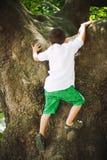 Pojkeklättring på träd Arkivfoto