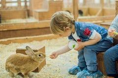Pojkelek med kaninerna Arkivbild