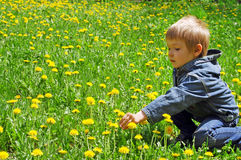 pojkemaskrosor field little Royaltyfri Bild