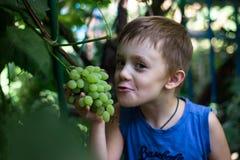Pojken biter av ett stycke av en grupp av druvor royaltyfri bild