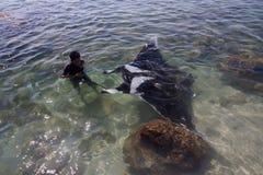 Pojken drar tvåhundra kg den STORA mantaen Ray (Lamalera, Indonesien) royaltyfria bilder