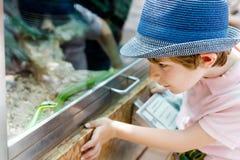 Pojken för den lilla ungen beundrar den giftiga gröna ormen i terrarium Arkivbilder