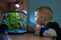 Pojken håller ögonen på fiskbehållaren i hans rum Arkivbild