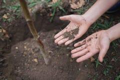 Pojken har planterat ett ungt träd in i jorden brown räknad dagjord som miljölövverk går den gående gröna treen för text för slog Arkivfoto