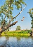 Pojken hoppar bevattnar in från tree royaltyfri bild