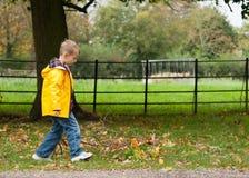 Pojken, i att gå till och med gräs i, parkerar i höst royaltyfria bilder